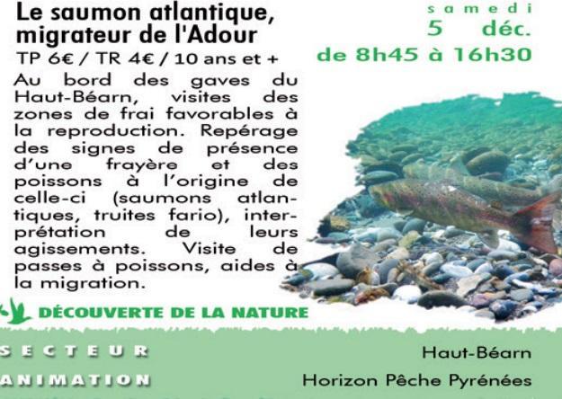 CPIE---le-saumon-de-l-atlantique-migrateur-de-l-adour
