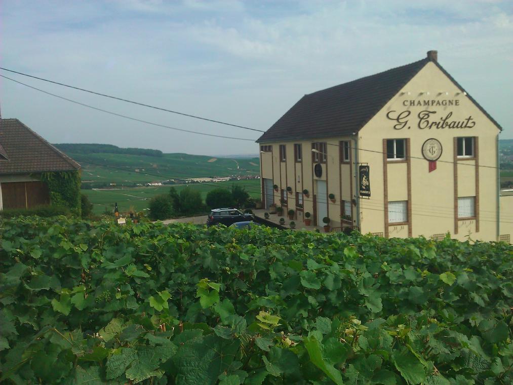 Champagne G. Tribaut - Hautvillers