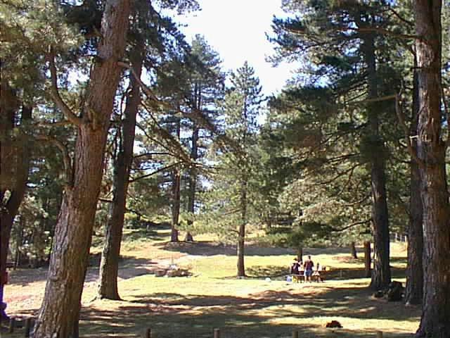 Forêt domaniale des Albères