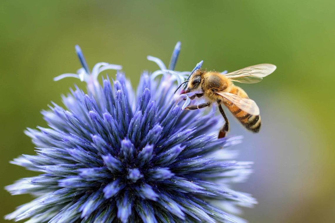 Conference-abeilles
