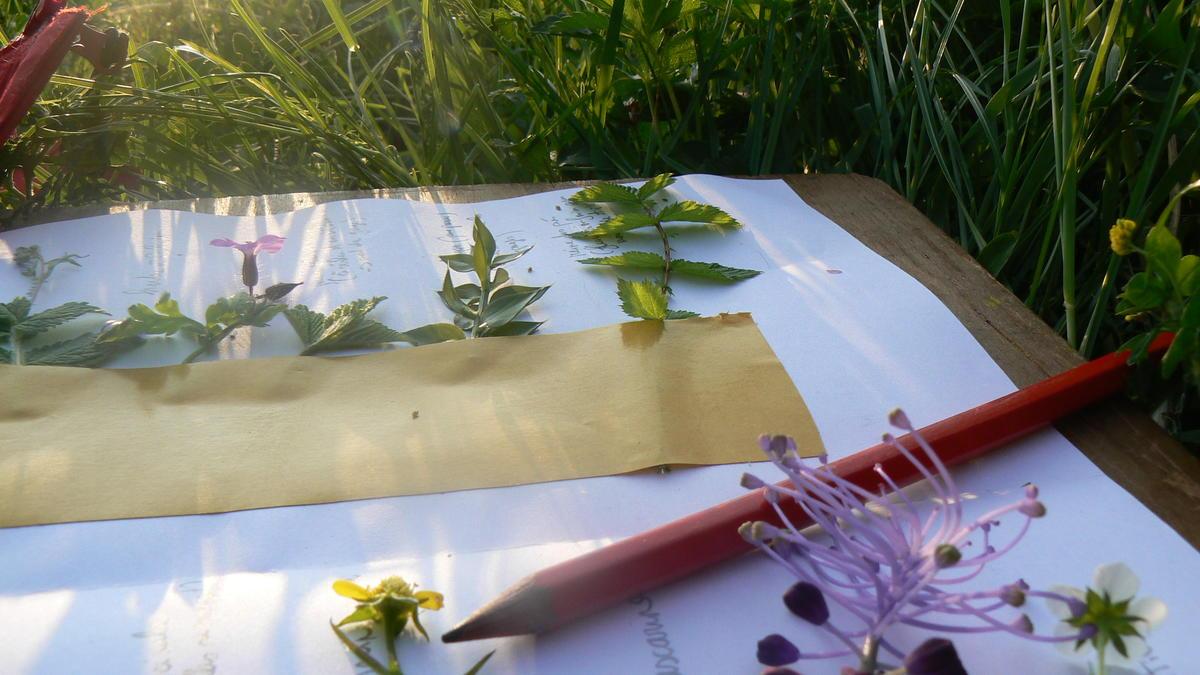 Plante comestibles_Bazouges_030511©cpievsl (11)