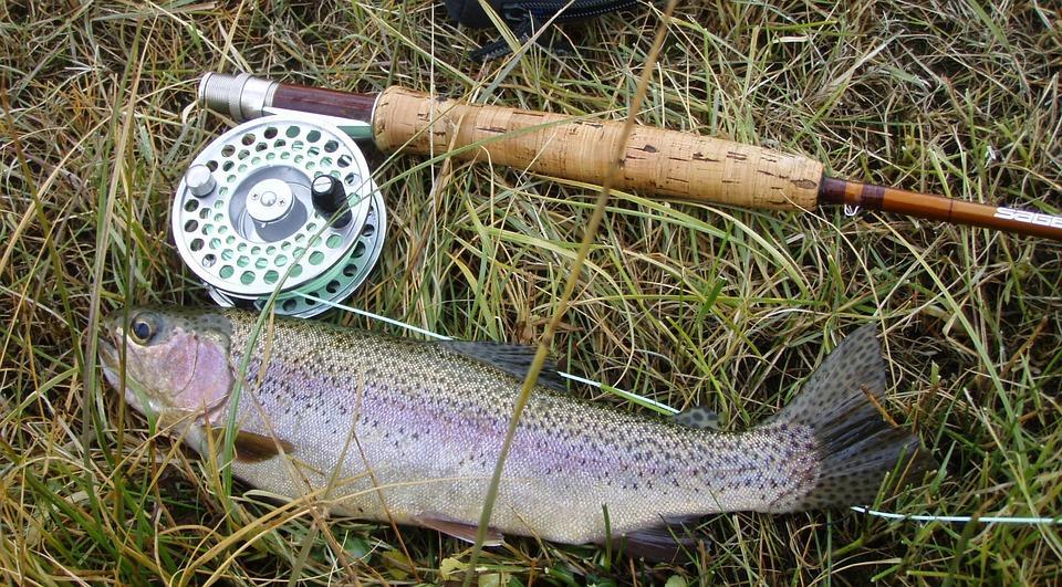 pêche truite pixabay