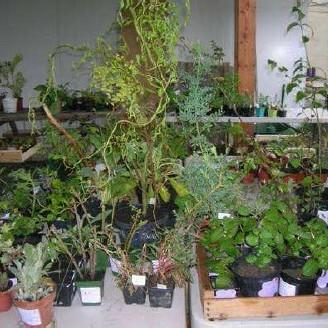 troc_plantes