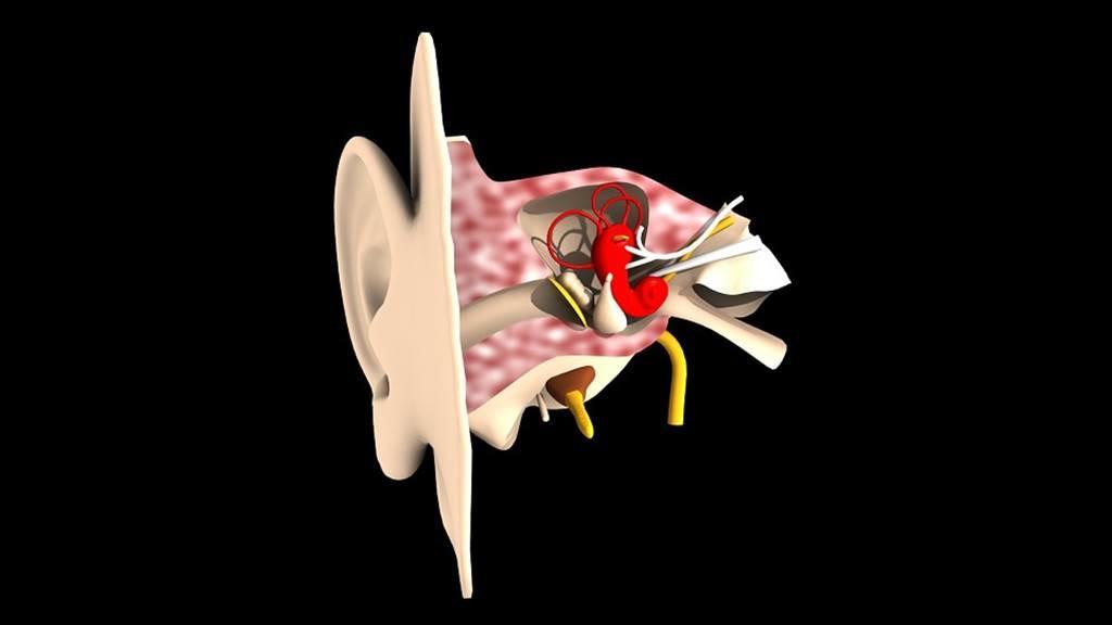 Oto-Rhinolaryngologue