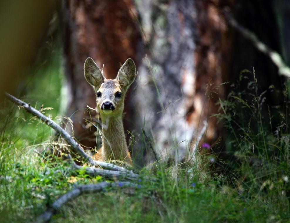Traces animaux St Léger les Mélèzes