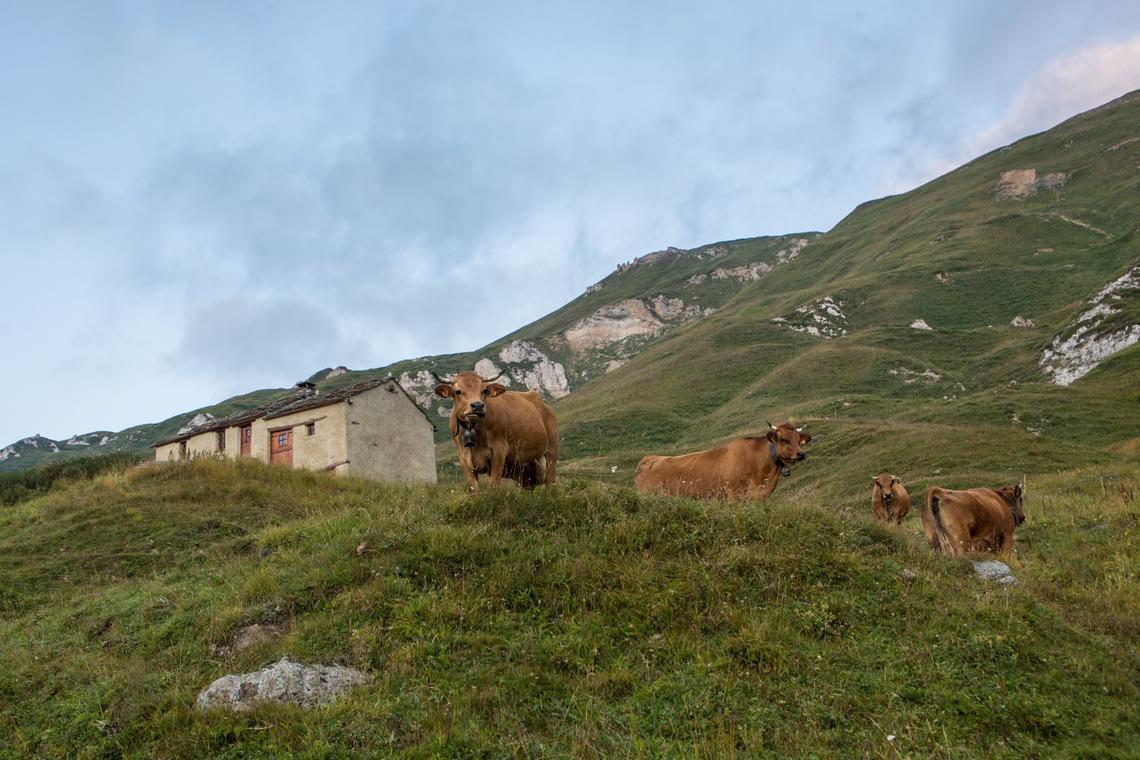val-cenis-alpage-pierre-longue