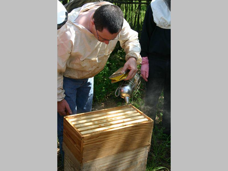 ecomusee_apiculture1_800