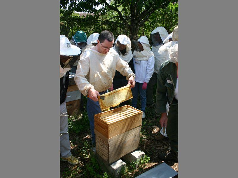 ecomusee_apiculture8_800