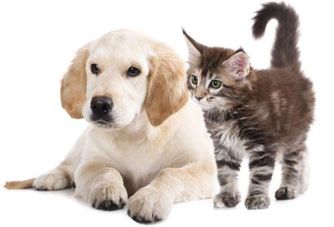 veterinaire (1)