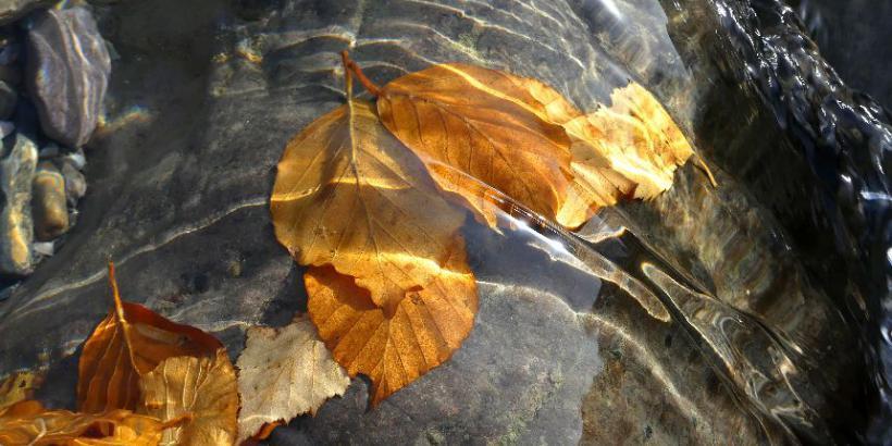 caresses-de-feuilles-pnp-2