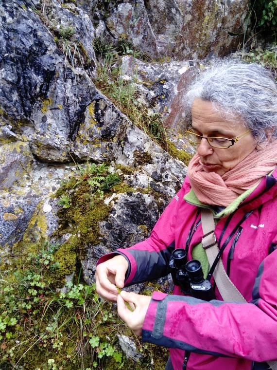 Sortie nature - musée de préhistoire grottes de saulges