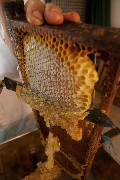 fete-du-miel-bigot-abeilles- PGreboval-jardins-des-renaudies-53-colombiers-du-plessis-mayenne 2
