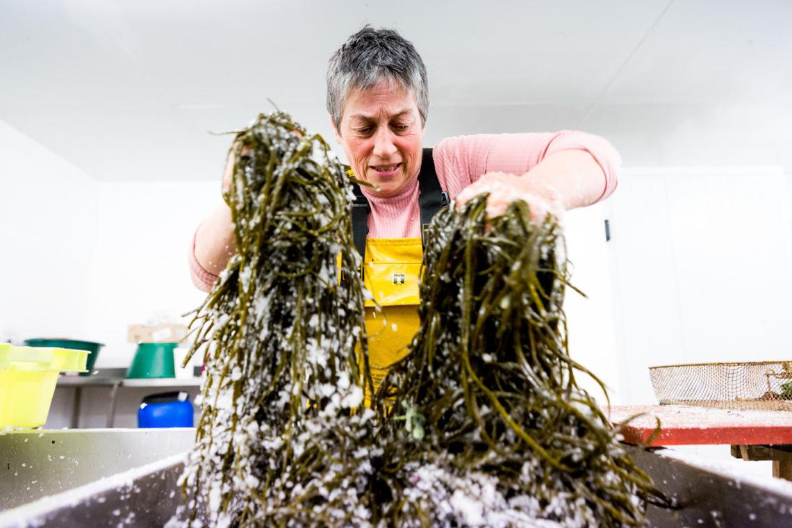Atelier cuisine des algues - Scarlette Le Corre - Guilvinec - Pays Bigouden