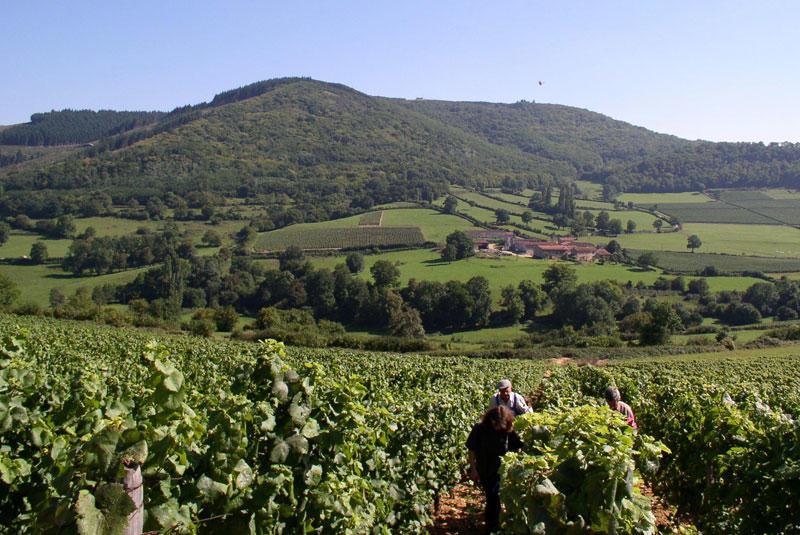 Prestige voies vignes