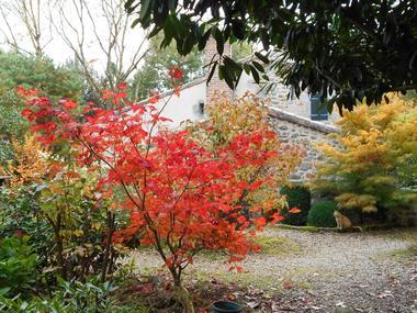 jardin-cistus2.jpg