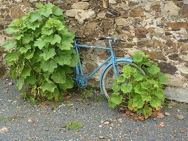 La Petite Ordonnière - vélobleu - sit.jpg