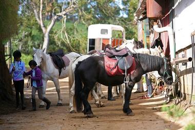 zarlor quiétude à cheval pack 1.jpg