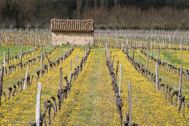 Cabane de vignes--Lot Tourisme - J. Morel.jpg