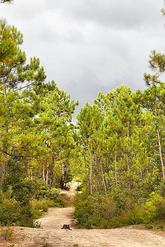 photo forêt.jpg