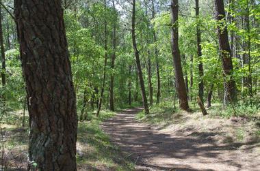 forêt d'écault ©L. de Rocquigny_OTBCO.jpg