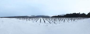 Vincent Lamoureux hiver.jpg