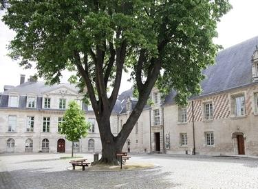 MAMCourArbre©A. Clergeot - Ville de Troyes