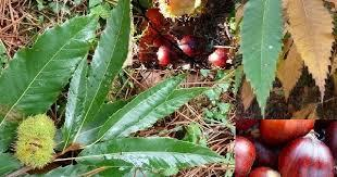 fruits sauvages automne.jpg