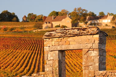 Vignes-Givry-automne-2017-JM (2).JPG