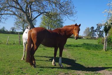 noirlieu-gite-du-chateau-cheval.jpg