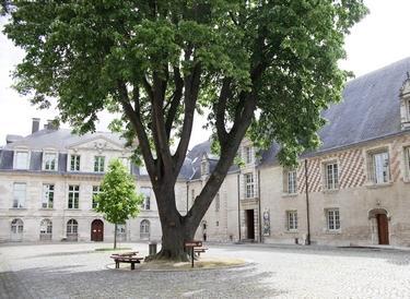 MAMCourArbre (c) A. Clergeot - Ville de Troyes