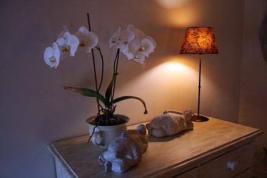 st aubin de baubigné-les roches moussets-chambre-orchidee.jpeg