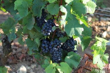 Givry-vins-vignes
