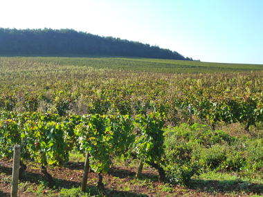 Vignobles de Rully