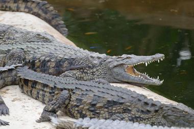 Planète des Crocodiles - Civaux - 2017 - ©Momentum Productions Mickaël Planes (3).JPG