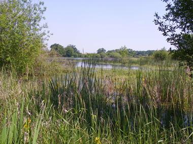 vegetations_rives_beaurepaire©cren-pc.JPG