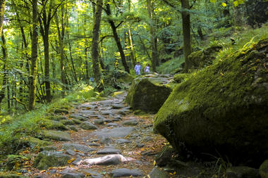 Chemin de randonnée.jpg