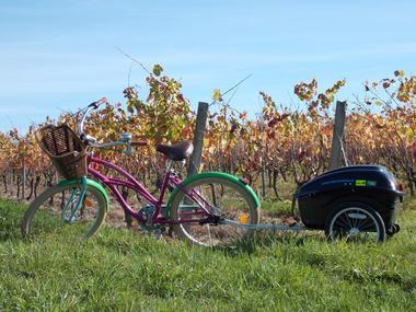 Original-Velo-Tour---Balade-dans-les-vignes-de-Pissotte---Pissotte----PDS---3.jpg