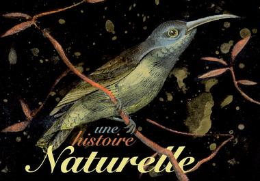 19.02.19 au 11.05.19 une histoire naturelle.jpg