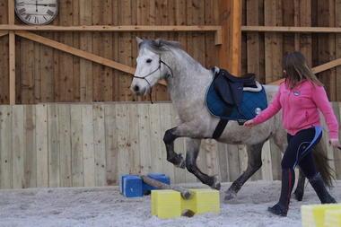Centre_Equestre_Crinieres_Ouest_Lanvenegen (13).JPG