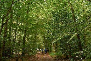 Randonnée en Forêt de Pont-Calleck.jpg