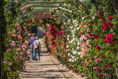 les floralies_web1.jpg