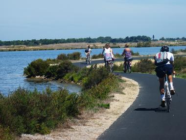 7 - vélo piste ile de ré - ©SPL Destination Ile de Ré.jpg