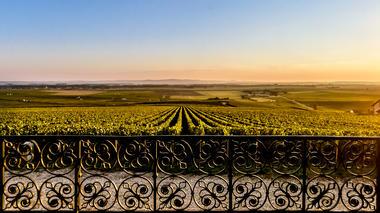 Veuve Clicquot - vignoble.jpg