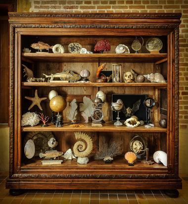le cabinet de curiosités © Léonard de Serres (2).jpg