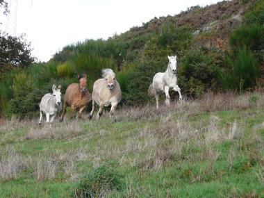 mauleon-loublande-gite-lecurie-verte-chevaux-sit.jpg