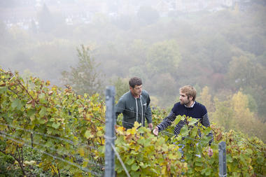 Terril viticole - Haillicourt © Brigitte Baudesson