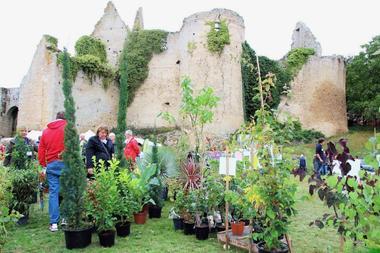 181007-bressuire-fete-plantes.jpg
