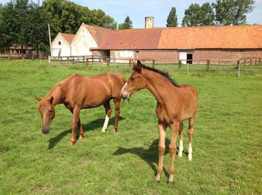 La_Tour_de_Nielles_gite_cote_d_opale_chevaux.JPG