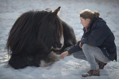 Centre_Equestre_Crinieres_Ouest_Lanvenegen (1).JPG