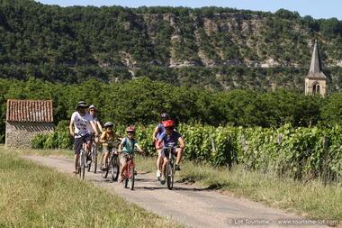 A vélo dans les vignes - Véloroute Vallée du Lot © Lot Tourisme - P. Foresti-Mediart360 150624-173412_800x533.jpg